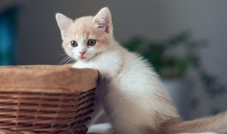 猫咪真的超可爱