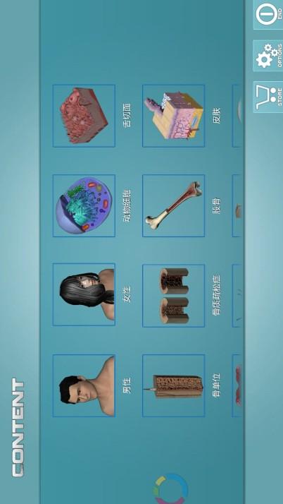 人体解剖学图集 v3.1.1图