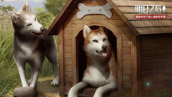明日之后哈士奇怎么买? 哈士奇购买与宠物更换方法解析图片1